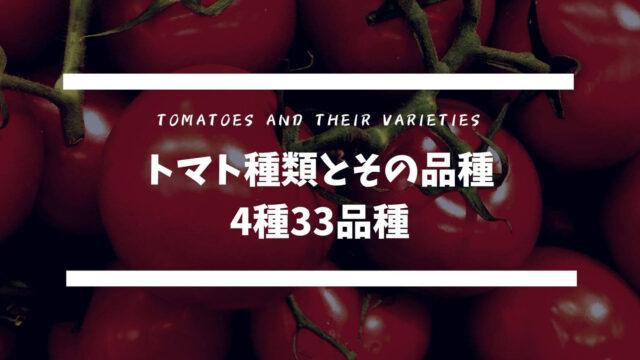トマト種類